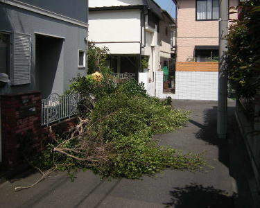 庭木の伐採